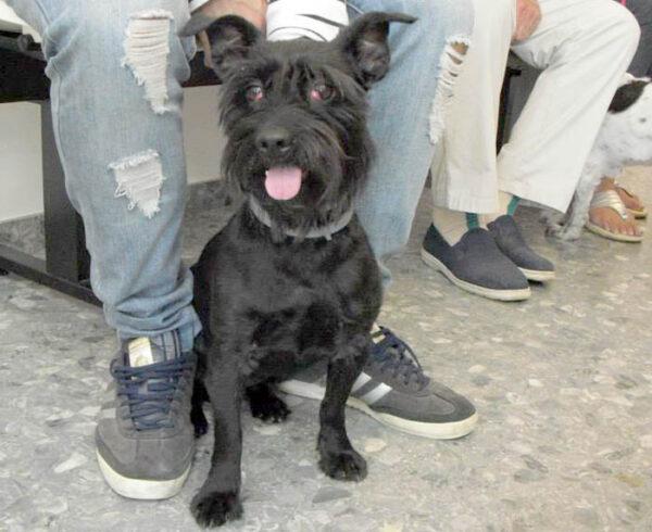 Atención oftalmológica para mascotas, Estepona