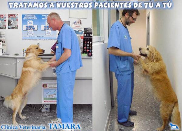 Atención veterinaria para perros, Estepona