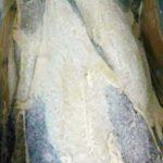 Bacalao Congelado