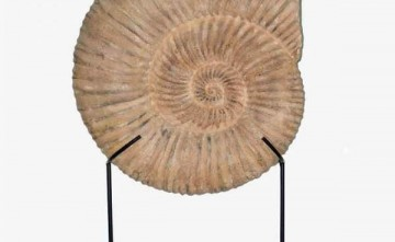 Caracola resina grande, decoración