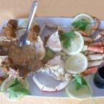Centolla cocida mariscos en Estepona