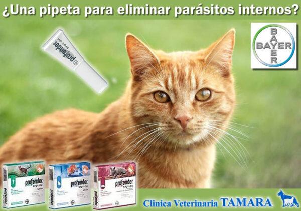 Desparasitación de mascotas, Estepona