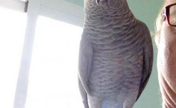 Veterinario, aves
