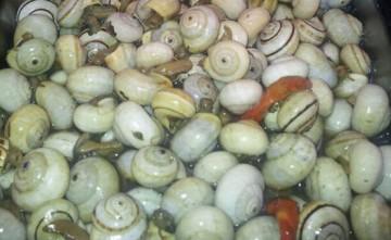 Tapas de caracoles Bares de Tapas en Estepona