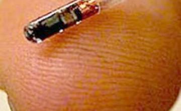 Implantación de chip identificativo para perros y gatos, Estepona