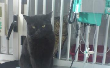 Hospital para animales de compañía en Estepona
