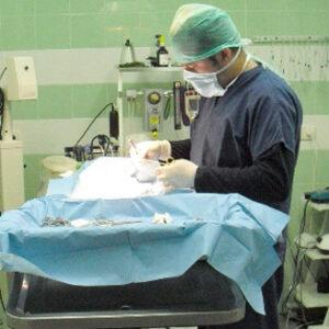 Cirugía Veterinaria en Estepona Veterinarios